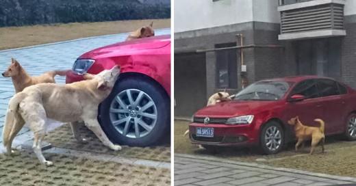 perro vuelve después de ser pateado