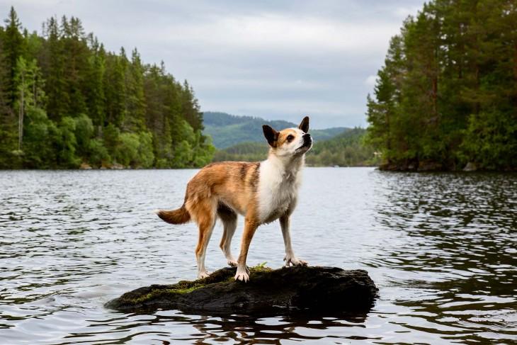 perro Perdicero