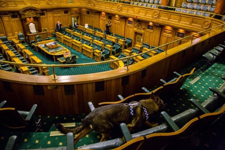 Perro policía en el parlamento