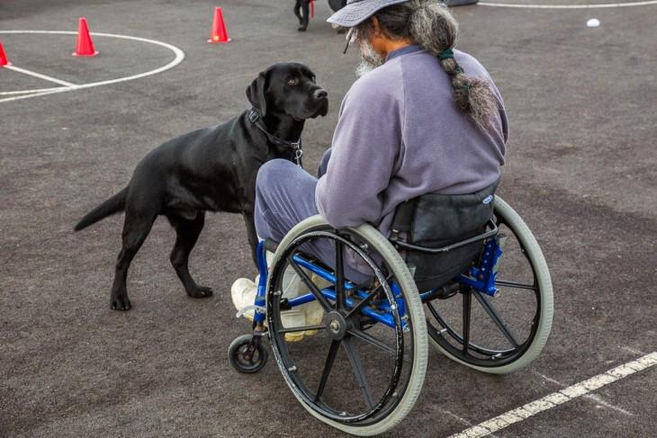 hombre en silla de ruedas con perro entrenado asistiendolo