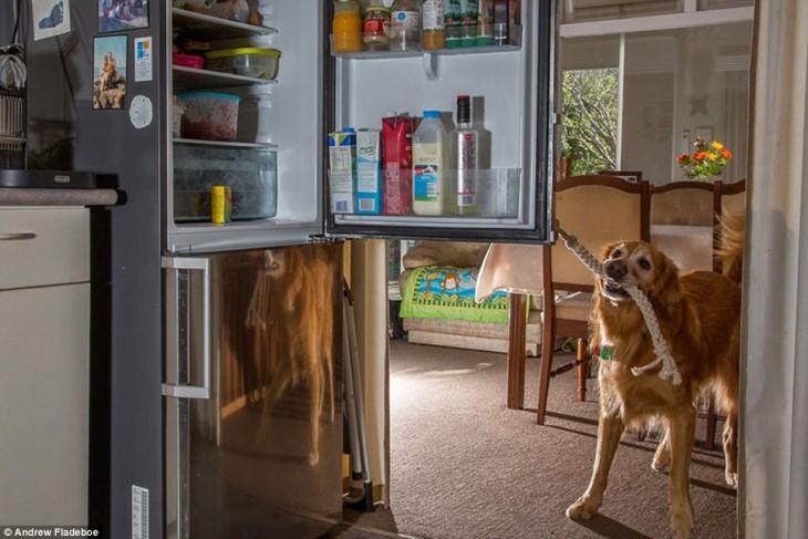 Perros para personas con epilepsia