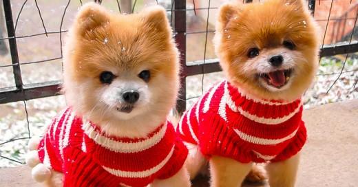 estas locamente enamorada de los perros