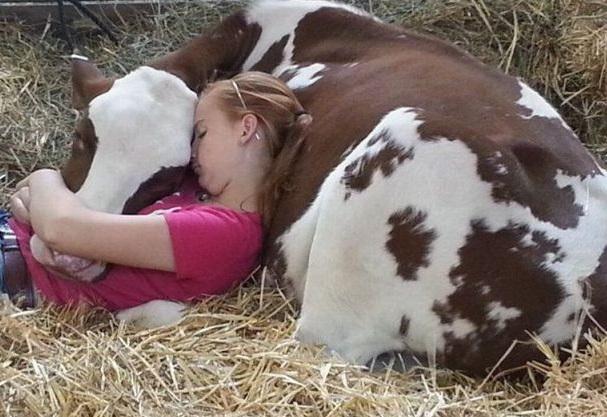 queanimalada.net foto-graciosa-hia-siesta-con-vaca