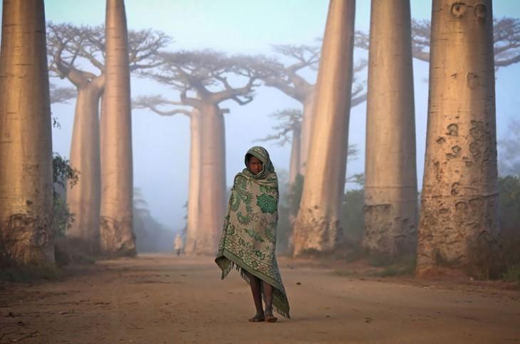 niña en medio de los árboles de baobabs en madagascar