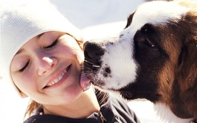 perro san bernardo lamiendo a una joven