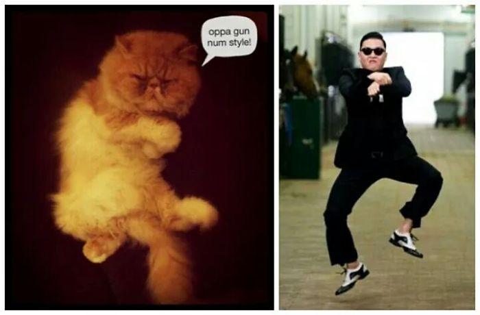 Gatito Gangnam Style