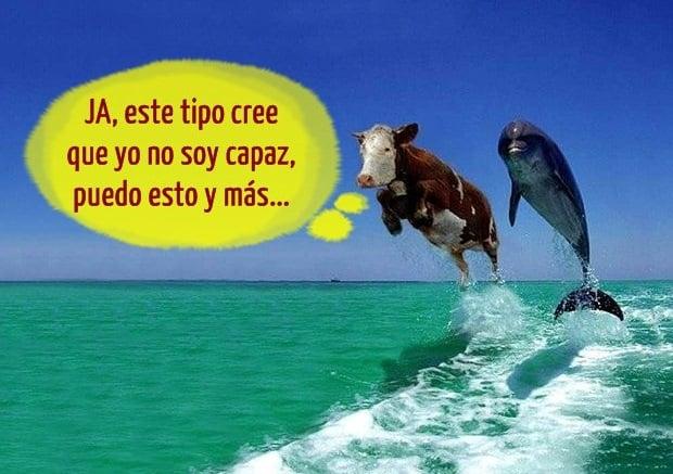 vaca-delfin-volando