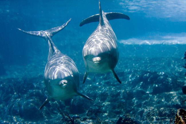 delfines embarazados