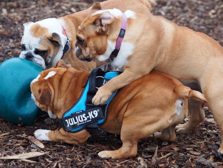 bullys peleando por jugar con la pelota azul en el bosque