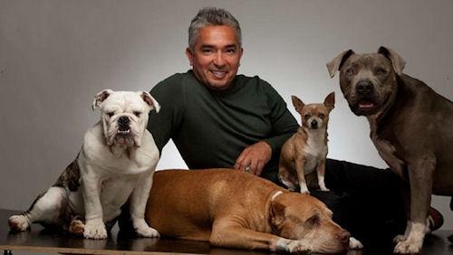 César Millan con sus perros entre ellos un bulldog inglés