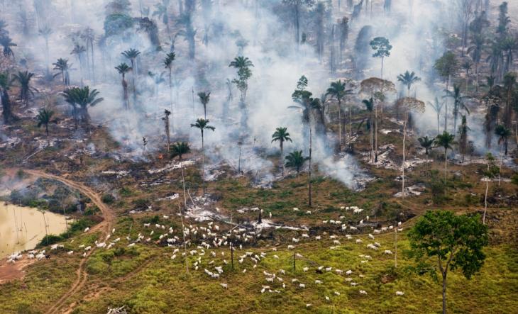 """Parte de la selva del Amazonas, siendo quemada para ser """"re-planificada"""""""