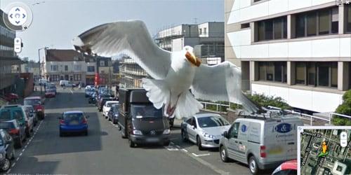 gaviota captada por street view en inglaterra
