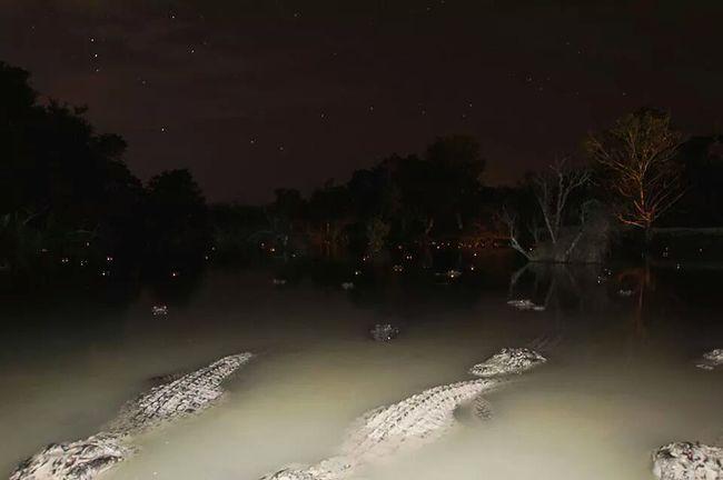 agua infestada de cocodrillos