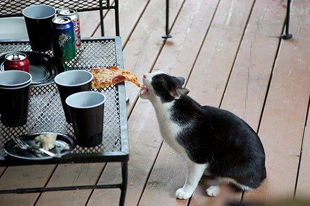gato robando pizza