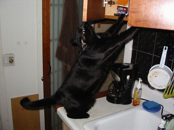 gato esculcando la alacena