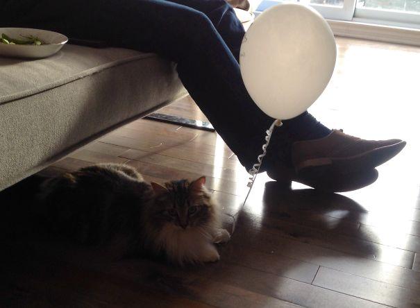 gato con globo feliz