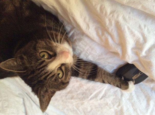 gato jugando con un mouse de computadora