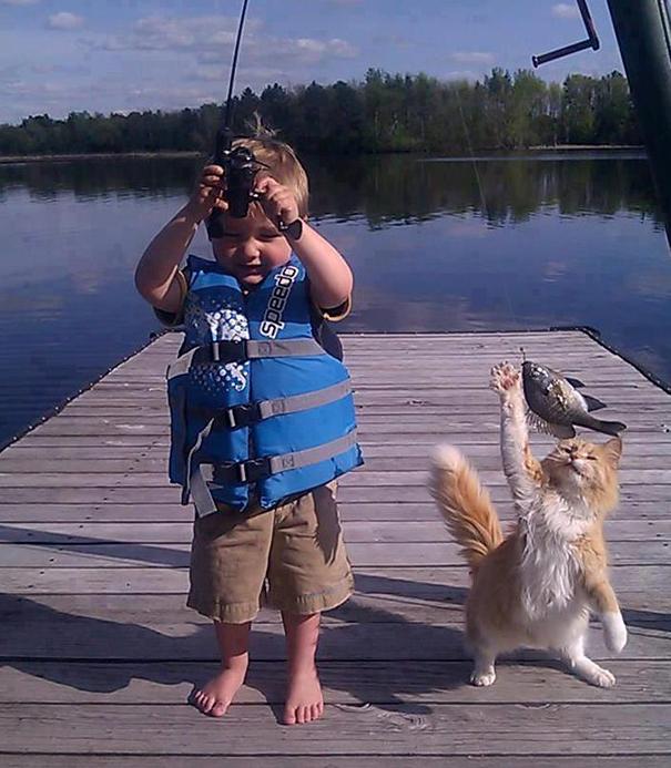 gato queriendo quitar el pescado de la caña para pescar