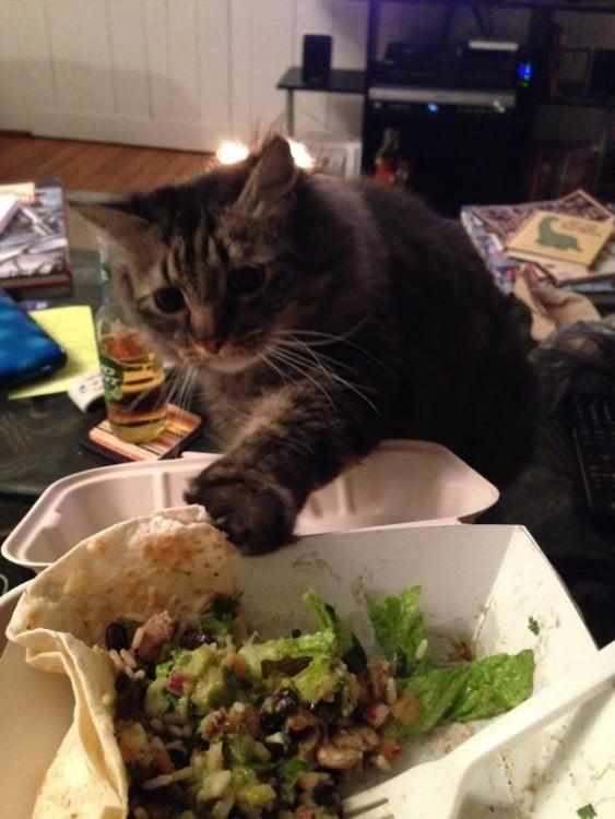 gato queriendo agarrara la quesadilla con guacamoles