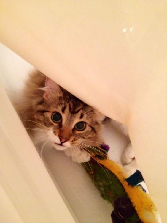 gato robandose al osito