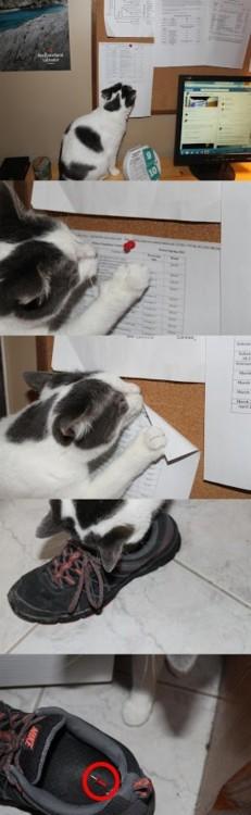 gato malvado hace broma en el trabajo