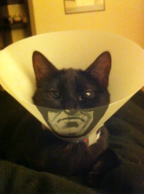 gato con cono de la verguenza simula a batman