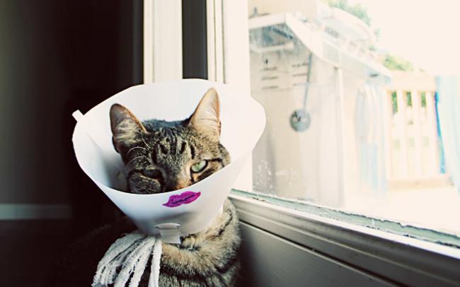 beso coqueto cono para gato
