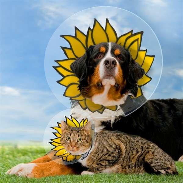 perro y gato cono girasoles