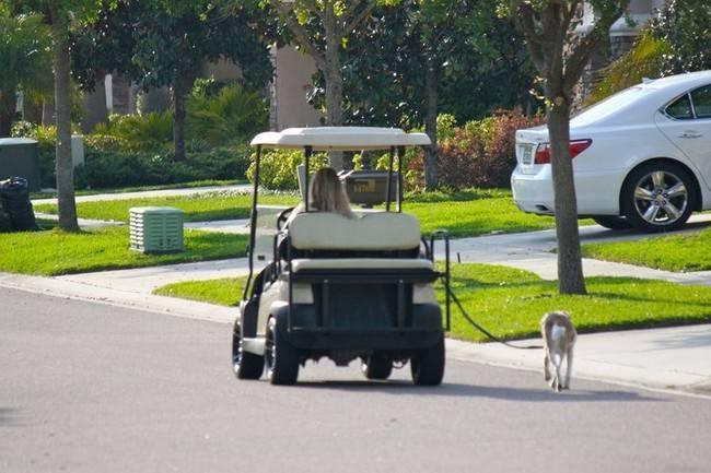 señora paseando en un carrito de golf al perro