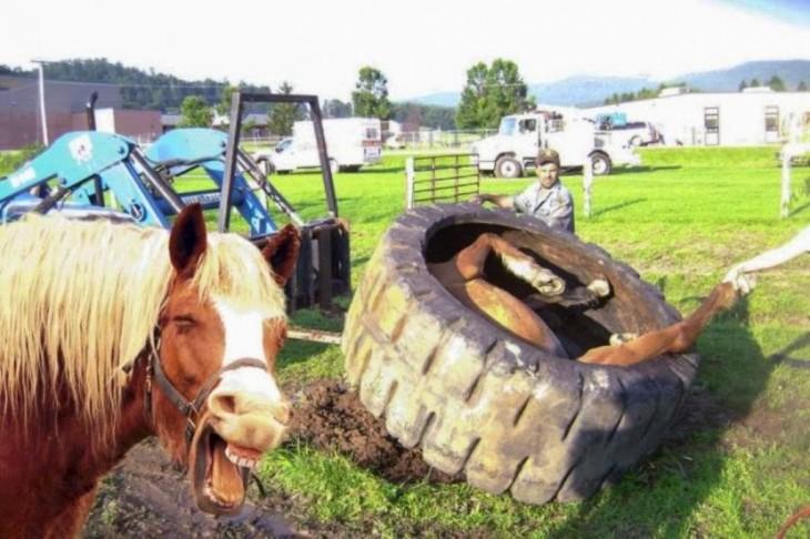 caballo se burla del otro que se encuentra metido en la llanta