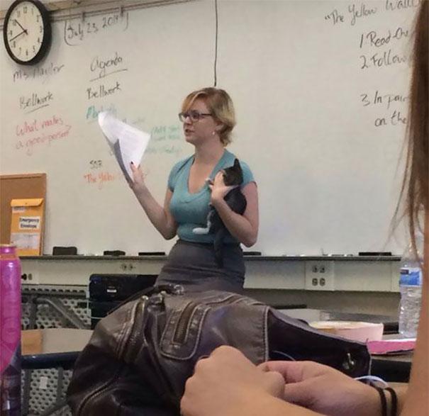 maestra explicando clase con un gato en la mano al fondo un pizarron blanco