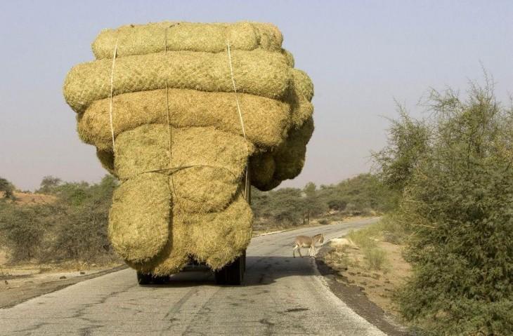 camion saturdao en paja casi atropella a burro