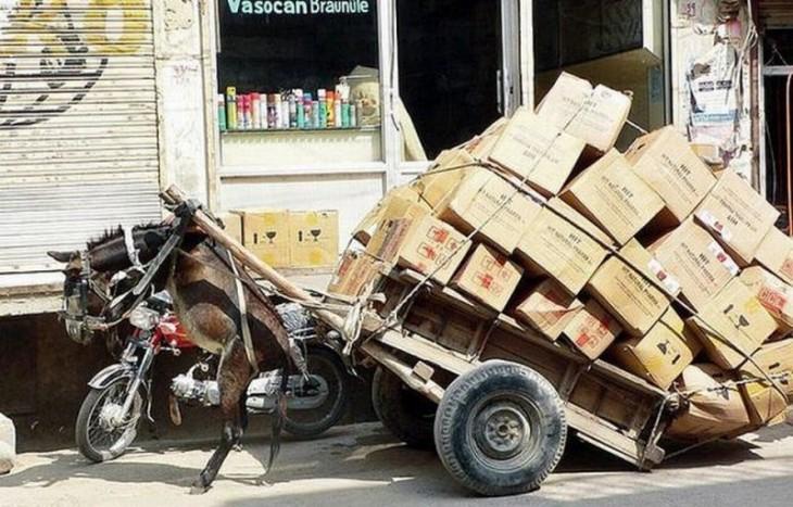 burro quedo volando por la sobre carga de su carrito