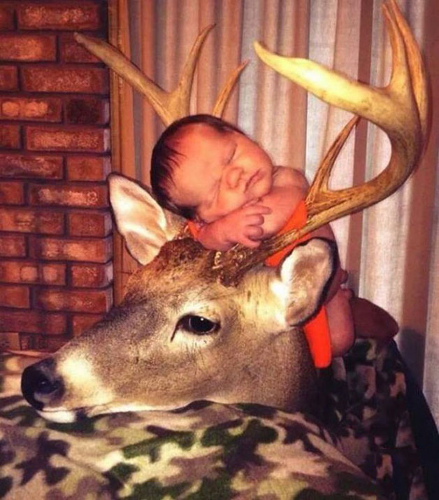 bebe incomodo en los cuernos de un venado posando para la foto