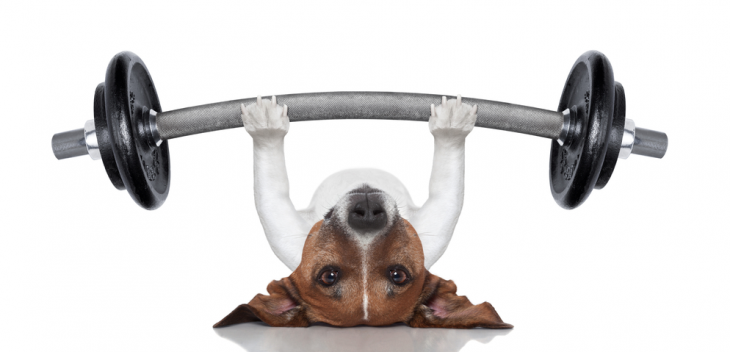 perrito haciendo pesas