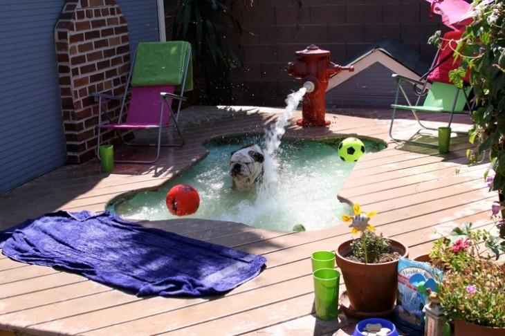 bulldog se baña en el jacuzzi