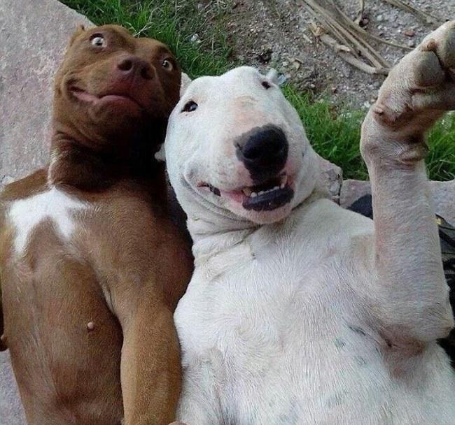 perros tomandose una selfie y una sonrisa