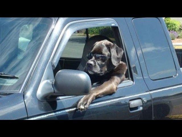 mastin manejando en su camioneta con lentes