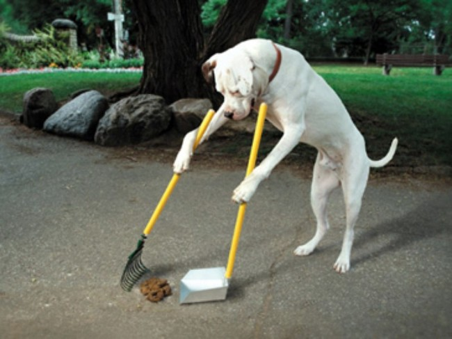 perro limpiando su popo