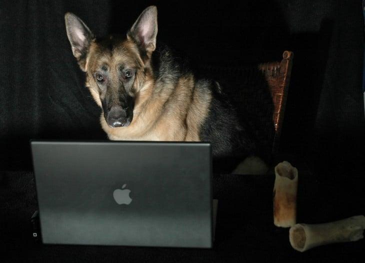 pastor aleman viendo la computadora
