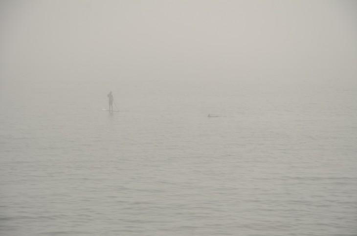 hombre parado en una tabla de surf en medio del mar con neblina y se acerca un tiburón