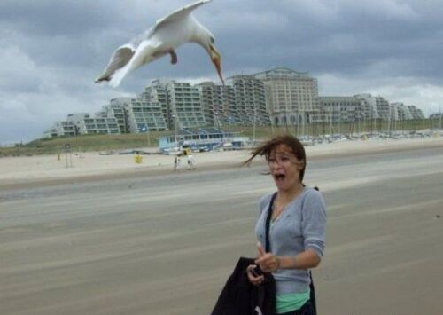 gaviota roba desayuno a mujer en la playa