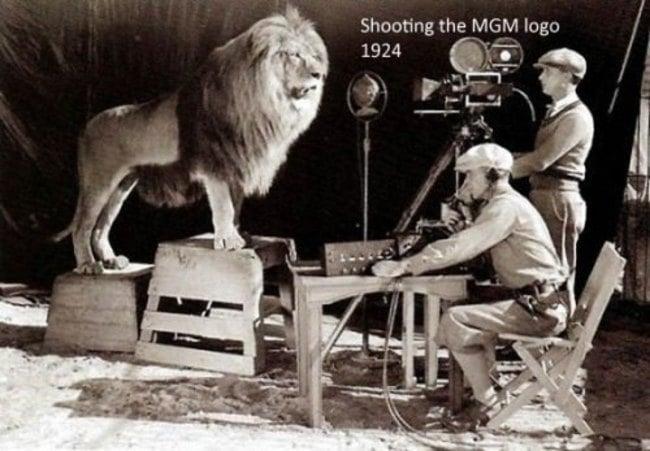 leon de mgm en fotografía para el logo