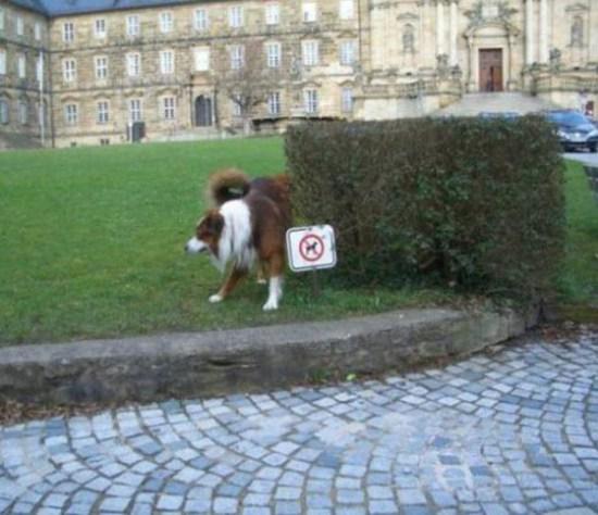 perro orinando en un parquedonde están prohibidos los perros