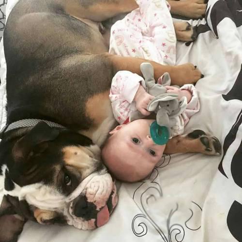 bulldog acostado con bebé