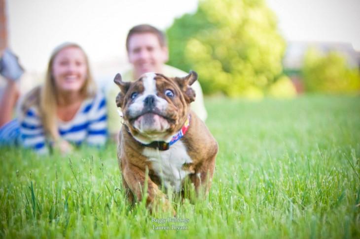 pareja viendo correr a su bulldog pequeño