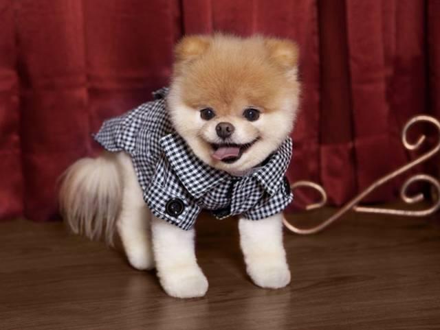 perro boo con saco a cuadreos