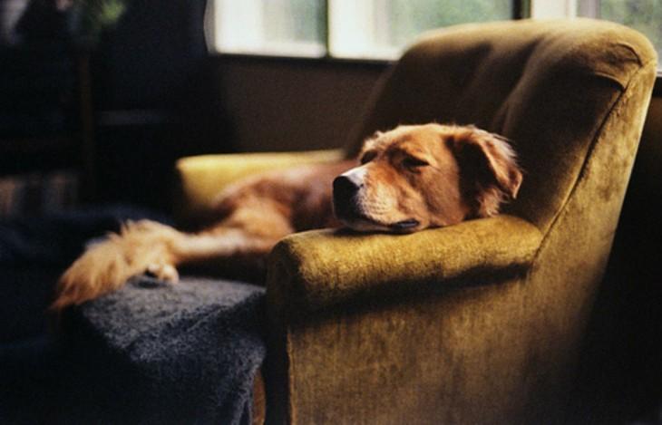 perro dormido sobre el sillon dejando los pelos pegados