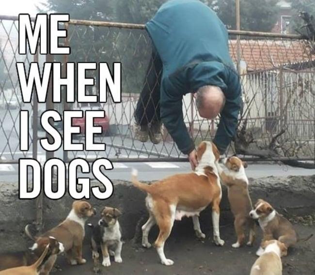 hombre trtatando de cruzar la reja para agarrar un perro