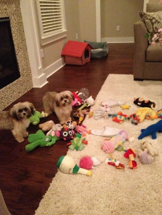 desorden de perros en la sala de la casa